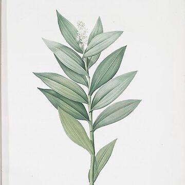 Vintage Plants - Smilacina stellata by delennjadzia