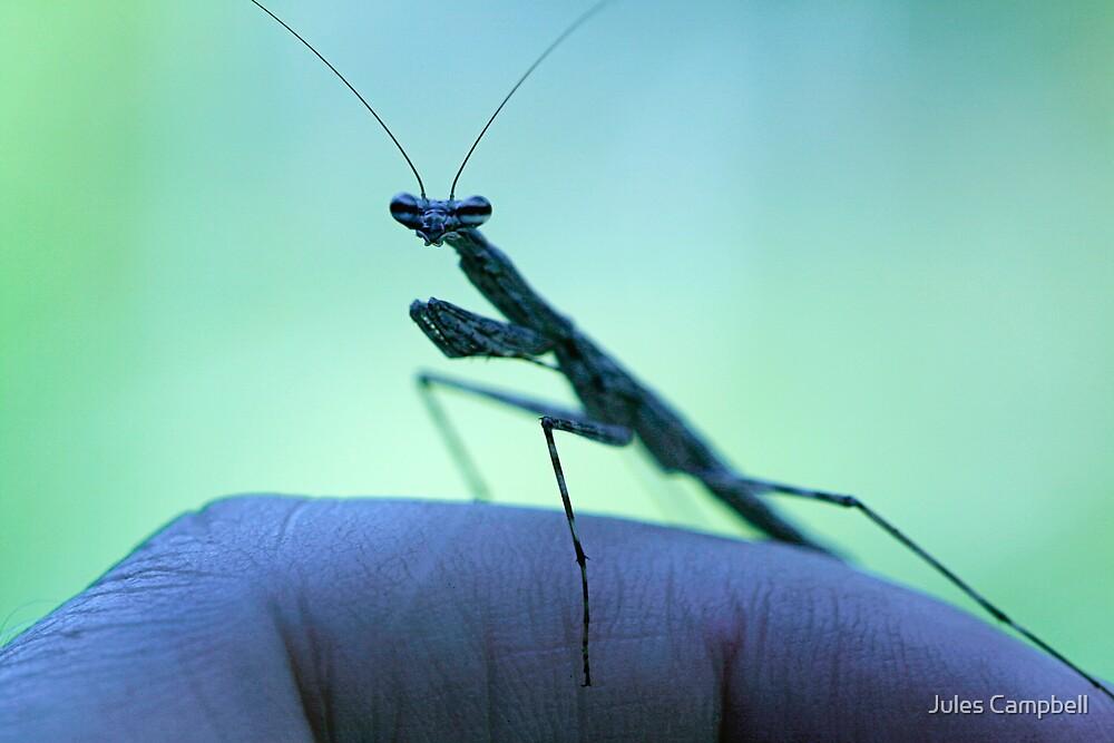 Praying Mantis/ Walking Stick by Jules Campbell