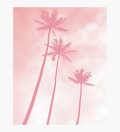 Pink Palm / Nature Photography Photographic Print