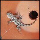 Wildlife: Lizard by JMerriman