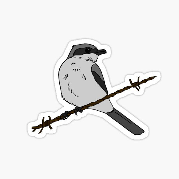 Loggerhead Shrike Sticker