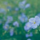 The Flax Fairy by vladstudio