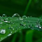 Raindrops on a day lily leaf by Brad Chambers