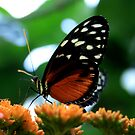 Butterfly 1 by Stephanie  Taylor
