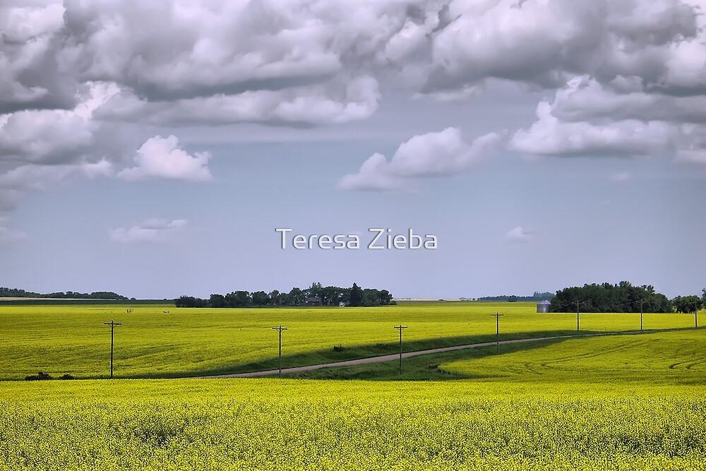Canola Field 2 by Teresa Zieba
