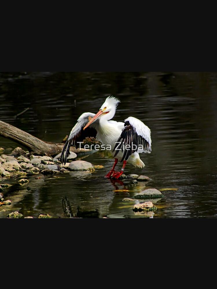 American White Pelican by tenia115