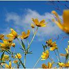 Meadow Flowers by JMerriman