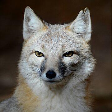 Northern Swift Fox by venny