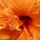 From Deep Within! Hibiscus flower macro. 'Arilka'. by Rita Blom
