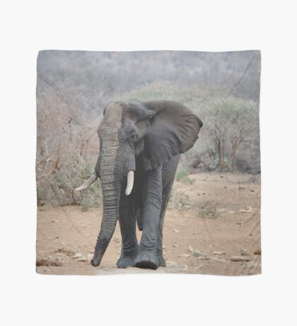 THE LONELY BUL -  THE AFRICAN ELEPHANT – Loxodonta africana Scarf