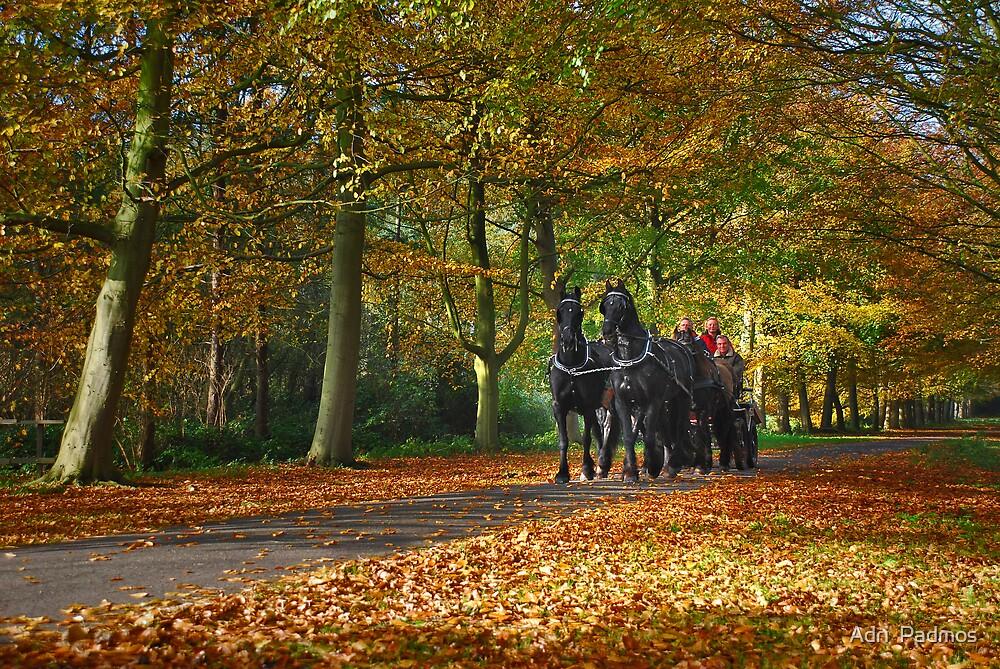 Autumn Ride by Adri  Padmos
