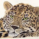 Leopard by Pamela Stirling