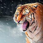 Winter Tiger by Daniel Ranger