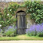 lavender doorway  by marxbrothers