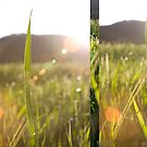 Grasses.. by Kasia Fiszer