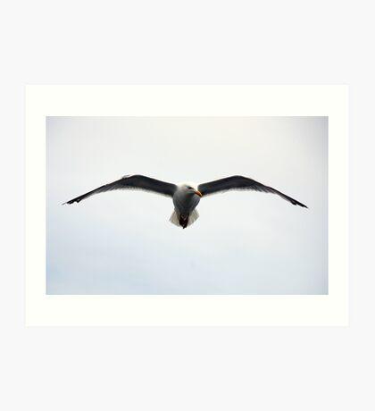 Jonathan Seagull Art Print