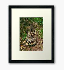 Scottish Wildcat Kittens Framed Print
