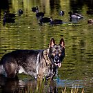 The Wolf in me by Mark van den Hoek