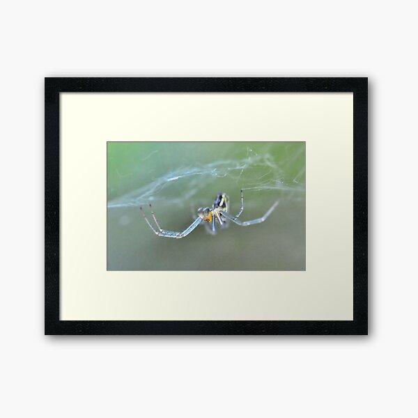 Beneath the Web Framed Art Print