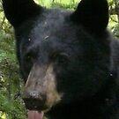 Bear portrait. by MaeBelle