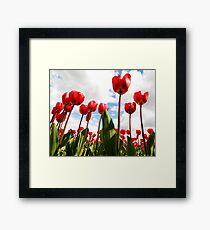 Tulip Fever Framed Print