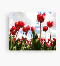 Tulip Fever Canvas Print