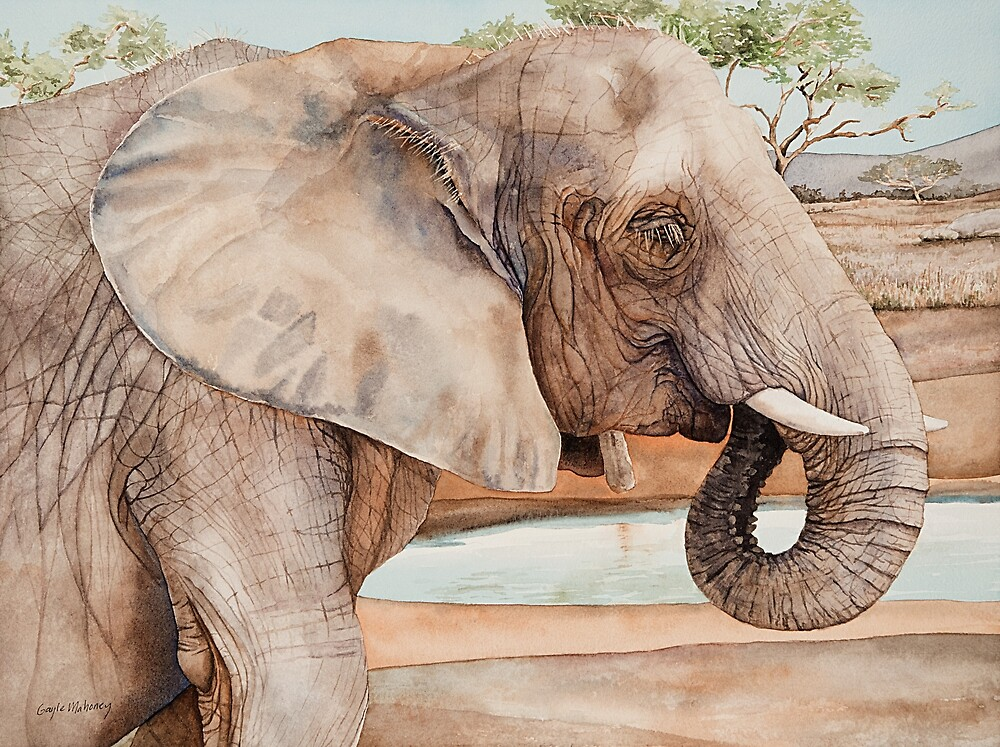 African Elephant Watercolor by Gayle Mahoney