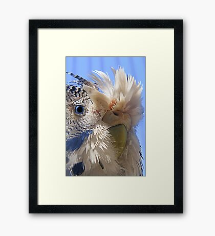 Jubba's new feather style Framed Print