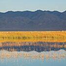 Northern Nevada Lake by Jared Manninen