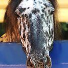 The circus horse by Alan Mattison