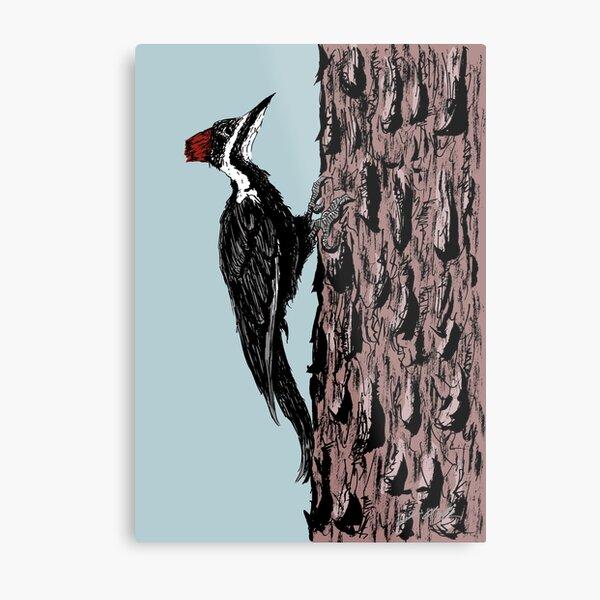 Pileated Woodpecker on a Jeffrey Pine Tree Metal Print