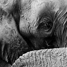 elephant by brokedownmelodies