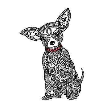 Sweet Chihuahua  by ivysanchez