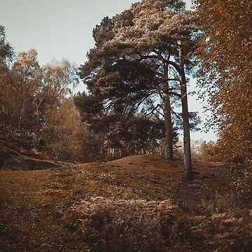 English Woodland by Undersound