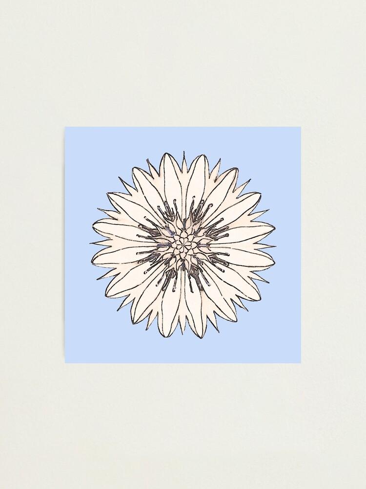 Alternate view of Cornflower Photographic Print