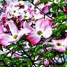 Pink Dogwood Blossoms by Susan Savad