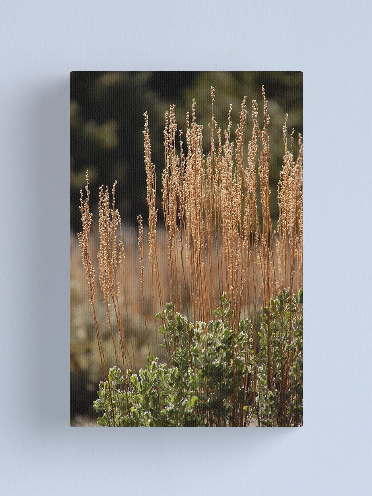 Alternate view of Mountain Sage Canvas Print