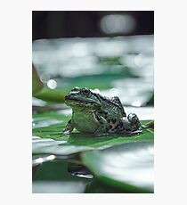 Big frog Photographic Print
