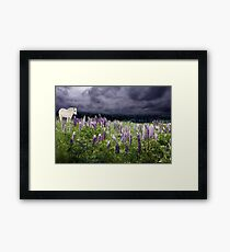 A Childs Dream of Lupine Fields Framed Print