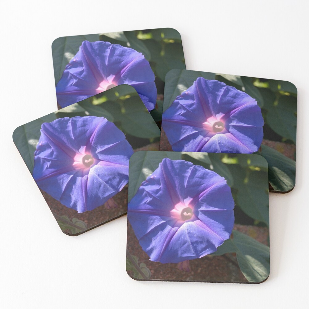 Morning Glory from A Gardener's Notebook Coasters (Set of 4)