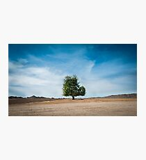 A lone tree  Photographic Print
