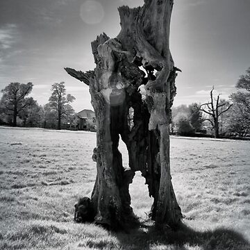 The Old Dead Tree (Infrared)   by Nigdaw