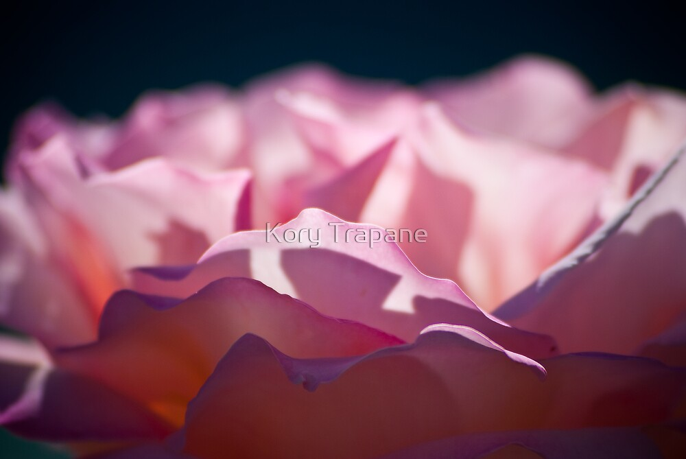 Pink Waves by Kory Trapane