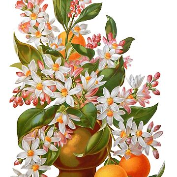 Victorian Orange Blossoms and Fruit Vintage Scrapbook Flowers by vinpauld