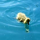 Gosling Reflection by BlueMoonRose