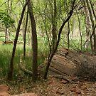 Zion woods by Martina Fagan