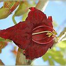 SAUSAGE TREE - Kigelia africana by Magriet Meintjes