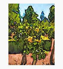The Yellow Roses and the Green Trees Photographic Print