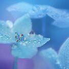 Hydrangea by Lifeware