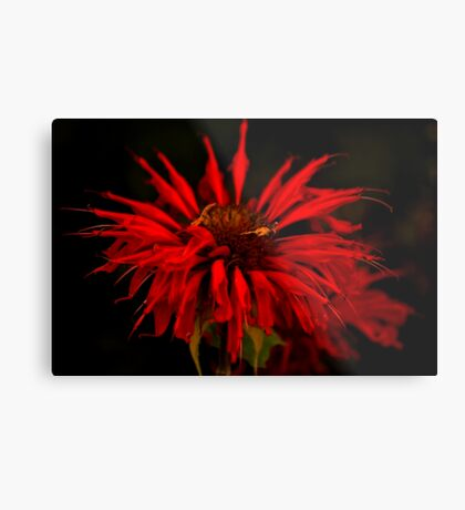 Red Wow Metal Print
